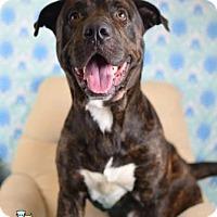 Adopt A Pet :: Thunder - Gulfport, MS