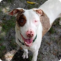 Adopt A Pet :: Destiny **I AM BLIND** - Bradenton, FL