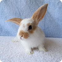 Adopt A Pet :: Skittles - Fountain Valley, CA