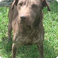 Adopt A Pet :: Liddy - Boca Raton, FL