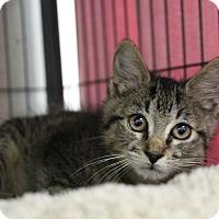 Adopt A Pet :: Marcus Brody - Sarasota, FL