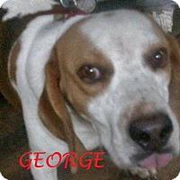 Adopt A Pet :: GEORGE - Ventnor City, NJ