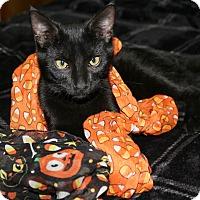 Adopt A Pet :: Benjamin - Ocean Springs, MS