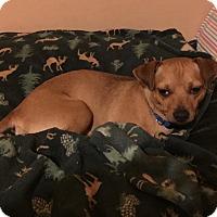 Adopt A Pet :: Ernie - West Allis, WI