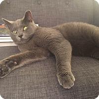 Adopt A Pet :: Grayson- Adoption Pending - Arlington, VA