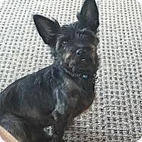 Adopt A Pet :: Severous - Washington DC, DC