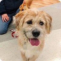 Adopt A Pet :: Apollo - Richmond, VA