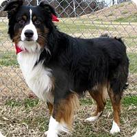 Adopt A Pet :: Joby - Oswego, IL