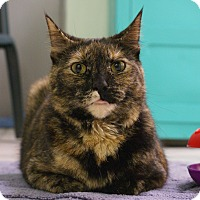 Adopt A Pet :: Ella - Austintown, OH