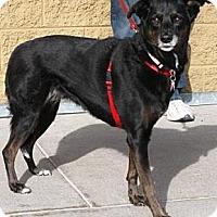 Adopt A Pet :: Kirra - Gilbert, AZ