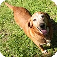 Adopt A Pet :: Dolly Loo (Reduced Fee) - Staunton, VA