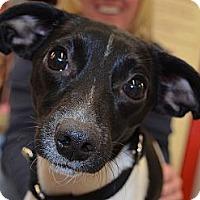 Adopt A Pet :: Kia - Bridgeton, MO