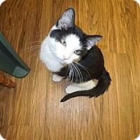 Adopt A Pet :: Lars - Medina, OH