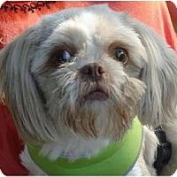 Adopt A Pet :: Mags-VA - Suffolk, VA