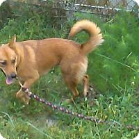 Adopt A Pet :: Vixen (fostered in FL) - Cranston, RI