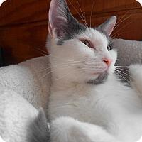 Adopt A Pet :: Diana - Richland, MI