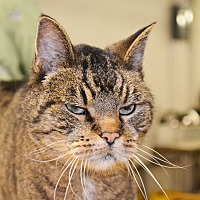 Adopt A Pet :: Luigi - Lincoln, NE