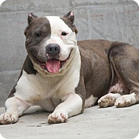 Adopt A Pet :: Lady HAPPY LOVING!! - Burbank, CA