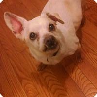 Adopt A Pet :: Milky Way - Long Beach, NY