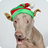 Adopt A Pet :: Ezra - Birmingham, AL