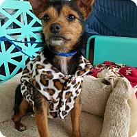 Adopt A Pet :: Tess - Scottsboro, AL
