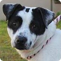 Adopt A Pet :: SELMA-Low Fees, spayed/Chipped - Red Bluff, CA