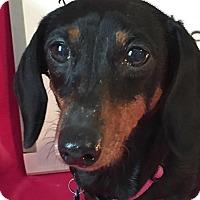 Adopt A Pet :: Peaches - Marcellus, MI