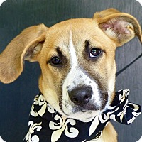 Adopt A Pet :: Frieda - Baton Rouge, LA