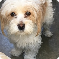 Adopt A Pet :: Lilly - Van Nuys, CA