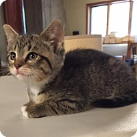 Adopt A Pet :: Erin - Ortonville, MI