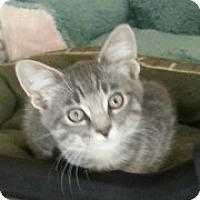 Adopt A Pet :: Rex - McHenry, IL