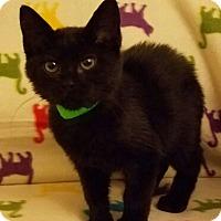 Adopt A Pet :: Harley - Aurora, CO