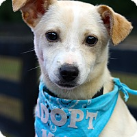 Adopt A Pet :: Logan - West Grove, PA