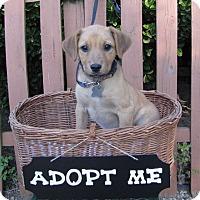 Adopt A Pet :: Melissa - Oakland, AR