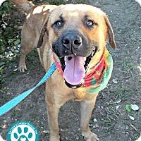 Adopt A Pet :: Chuck - Kimberton, PA