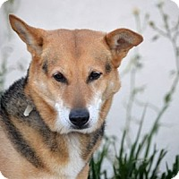 Adopt A Pet :: Millie - Irvine, CA