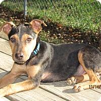 Adopt A Pet :: Delta Major - Homer, NY
