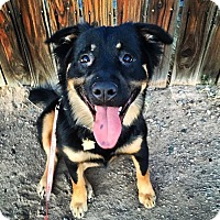 Adopt A Pet :: Suzy - Phoenix, AZ