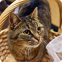Adopt A Pet :: Emma - Bristol, CT