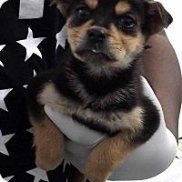Adopt A Pet :: Snickers - Orangeburg, SC