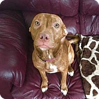 Adopt A Pet :: Lisbeth - Dayton, OH