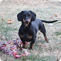 Adopt A Pet :: TITUS - Portland, OR