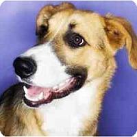 Adopt A Pet :: Rocco - Scottsdale, AZ