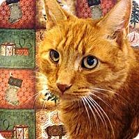 Adopt A Pet :: Kirra - Albany, NY
