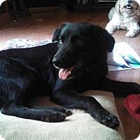 Adopt A Pet :: Duchess - Warrenton, NC