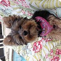 Adopt A Pet :: Lexie - Leesburg, FL