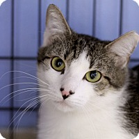 Adopt A Pet :: Bismark - Chicago, IL