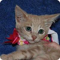 Adopt A Pet :: Catlin - La Jolla, CA