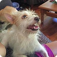 Adopt A Pet :: Cari - Natchitoches, LA