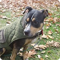 Adopt A Pet :: Molly - Tyrone, PA
